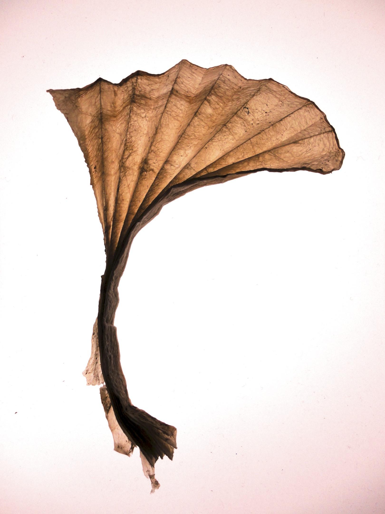 folded fan