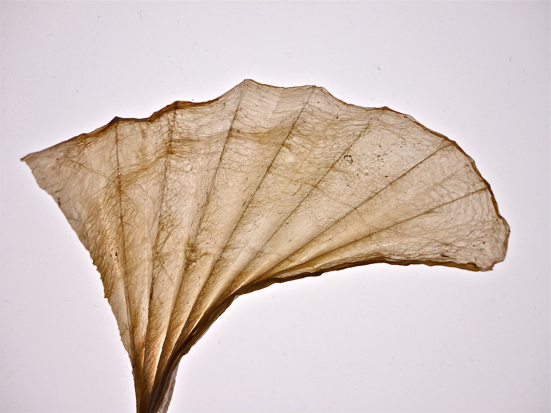 folded fan - closeup
